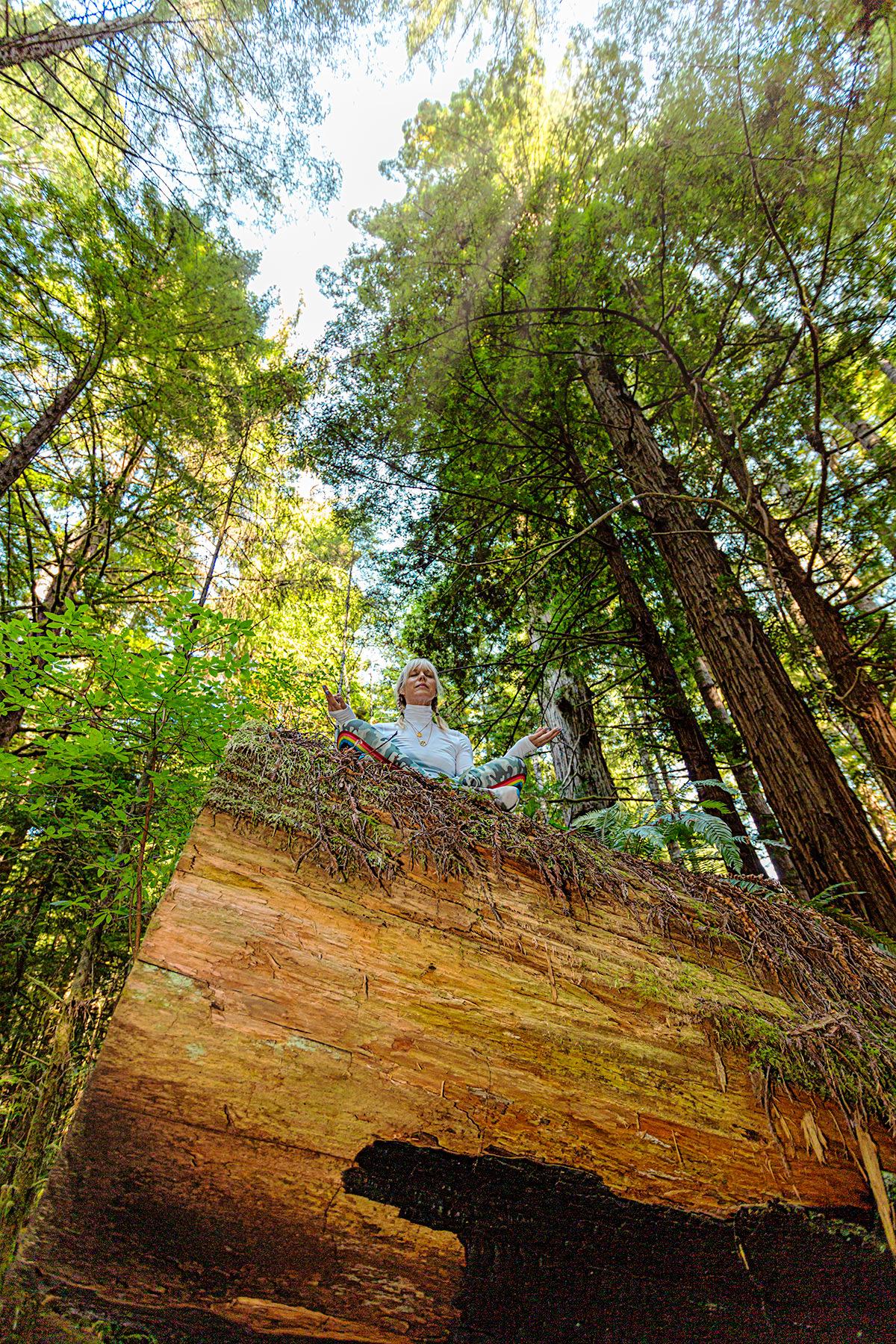 Sunrays in the Redwoods