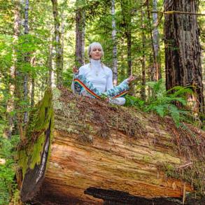 Meditation Redwood Forest Close-up